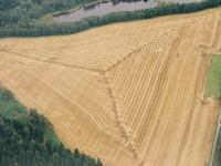 harvest-pattern.jpg